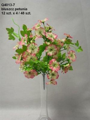 bluszcz petunia