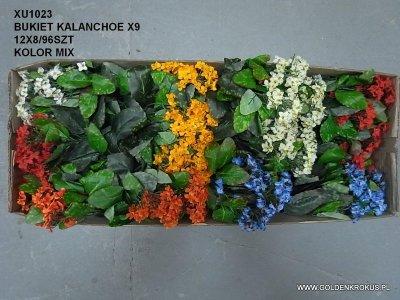 BUKIET KALANCHOE X9