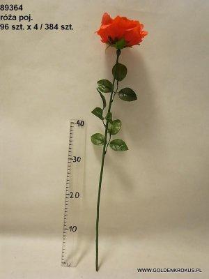 róża pojedyńcza
