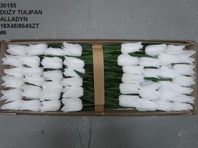 tulipan alladyn