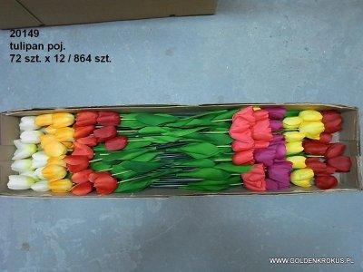 tulipan poj.